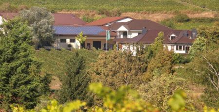 Weingut Machmer deutscher Biowein aus Rheinhessen