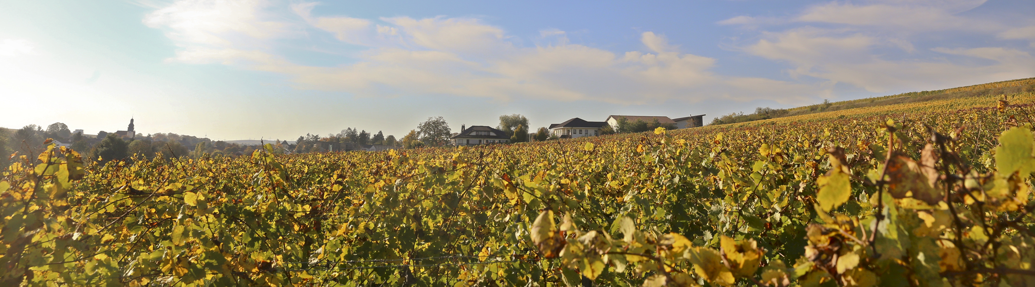 Weingut Machmer deutsches Bioweingut