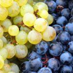 grapes-3678073_1920